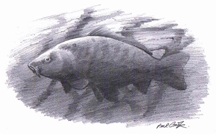 Drawing of fish by paul Cook